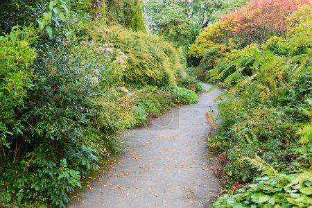 Path in a Peaceful Green Garden