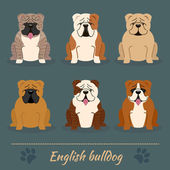 Different colors English Bulldog