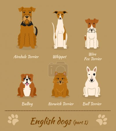 English breed of dogs