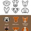 Постер, плакат: English breed of dogs
