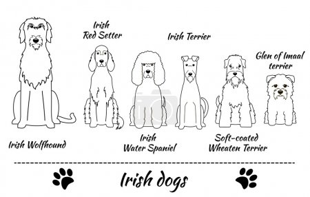 Irish breed of dogs