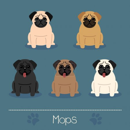 Different colors Mops