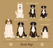 Swiss breed of dogs