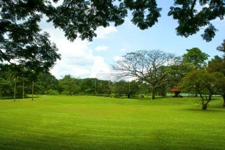 Peaceful Garden view