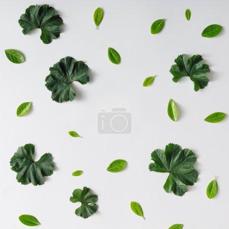 Photo pour Fond de motif naturel créatif fait de feuilles. Pose plate . - image libre de droit