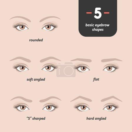 5 basic eyebrow shapes.