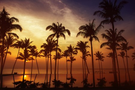 Photo for Beautiful orange sunset with silhouettes of palms - Royalty Free Image