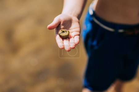 Photo for Seashell held by a young boy on the beach - Royalty Free Image