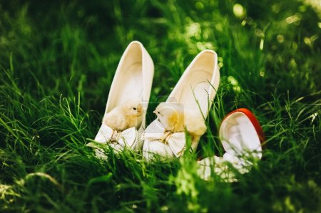 chickens and wedding shoes
