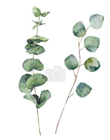 Photo pour Aquarelle eucalyptus feuilles rondes et branches. Bébé eucalyptus peint à la main et éléments en dollars argentés. Illustration florale isolée sur fond blanc. Pour le design, le textile et le fond . - image libre de droit