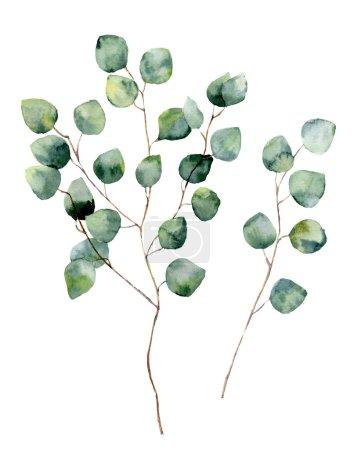 Photo pour Aquarelle dollar d'argent eucalyptus avec des feuilles rondes et des branches. Éléments d'eucalyptus peints à la main. Illustration florale isolée sur fond blanc. Pour le design, le textile et le fond . - image libre de droit