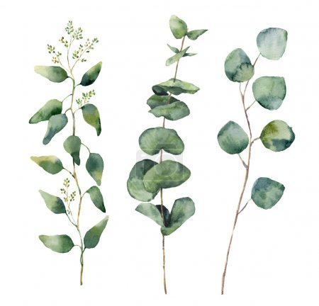 Photo pour Aquarelle eucalyptus feuilles rondes et branches ensemble. Bébé peint à la main, graines et éléments d'eucalyptus en dollars argentés. Illustration florale isolée sur fond blanc. Pour le design et le textile . - image libre de droit