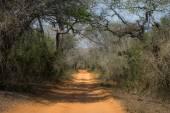 Safari road in South africa