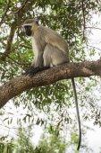 Monkey relaxing on branch