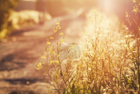 Photo for Summer background, country road at sunset, grass in backlight, blurred image with the effect of motion, shallow depth of field - Royalty Free Image