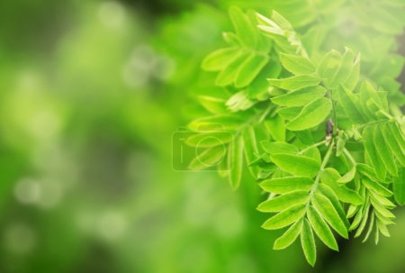 Photo for Spring green leaves natural background, blurred image, selective focus, shallow depth of field - Royalty Free Image