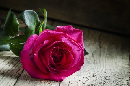 Vintage composition with fresh pink rose