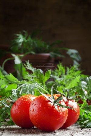Photo pour Tomates rouges humides, herbes aromatiques, gros plan, faible profondeur de champ, mise au point sélective - image libre de droit