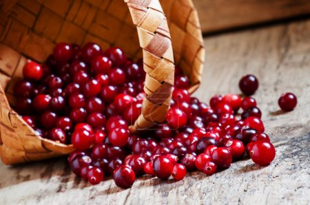 Fresh ripe cranberries poured out of a wicker basket