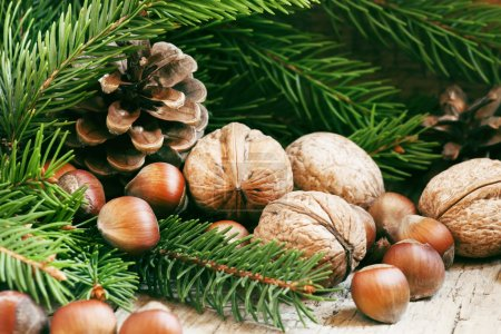 Christmas background with walnuts, hazelnuts and fir branches and cones