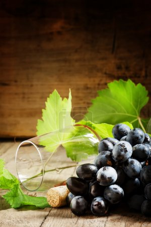 Grapes with vine and wine glass