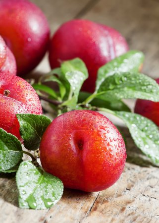 Ripe red plums