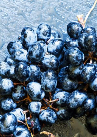 Blue grapes on a dark background, toned image