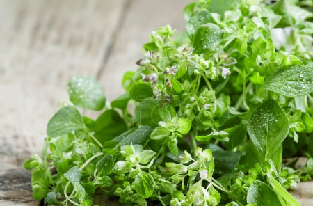 Fresh oregano on a wooden background