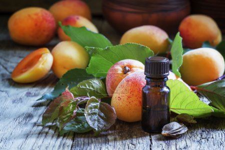 Essential oil of apricot pits, and fresh apricots with leaves