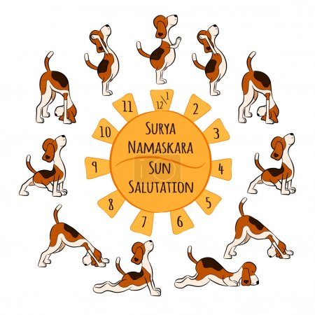 funny dog doing yoga position of Surya Namaskara