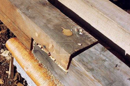 Photo pour Connecté par le biais de piquet de bois de bois se trouvant sur l'écorce - image libre de droit