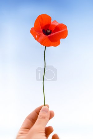 Woman hand holding a poppy