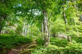Spring Nature. Beautiful scene in the green forest