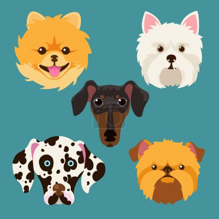 Muzzle different breeds of dogs