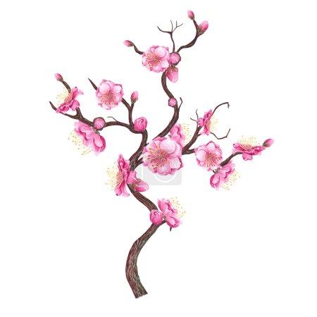 Hand drawn sakura blossom.