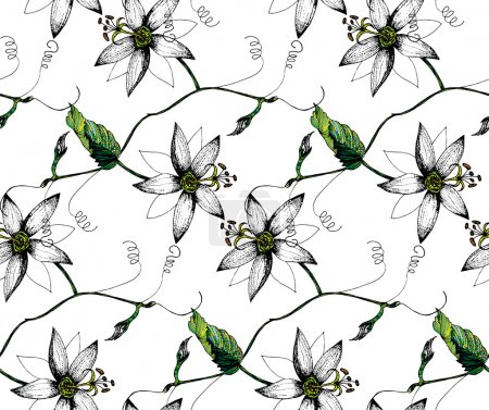Illustration for Zentangle stylized Passion flowers, leavess, buds & tendril seamless pattern on white background. Cloth & rug design. Black, Green & White vector backdrop. Hand drawn engraved vintage illustration. - Royalty Free Image
