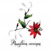Passiflora flower pattern
