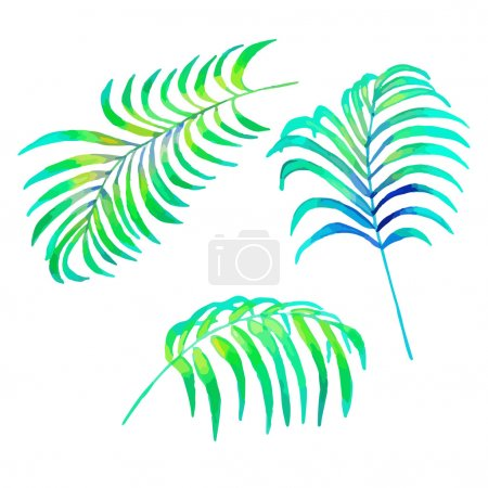 Illustration for Watercolor Palm Leaves, isolated on white background. Vector Element for your design. Hand drawn botanical illustration. - Royalty Free Image