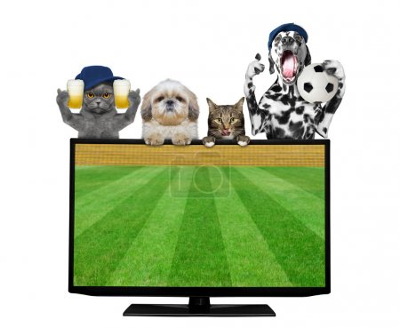Dogs and cats with ball and beer fan football championship