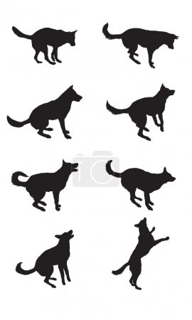 Black silhouettes of shepherd dog in different poses