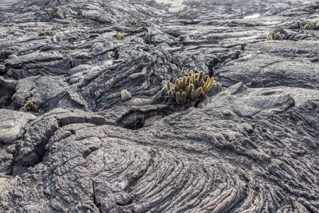 Galapagos Islands volcanic rock formations