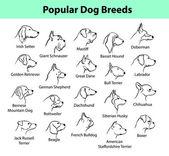Some Popular Dog Breed Portraits