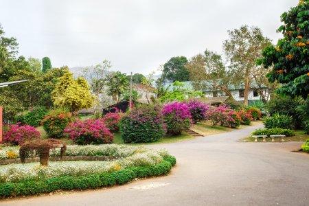 Photo for Beautiful flowers landscapes in Peradeniya, Sri Lanka - Royalty Free Image