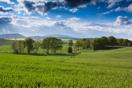 Green field at sunny day