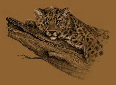 Pencil sketch - Leopard lying on the tree, isolated on brown