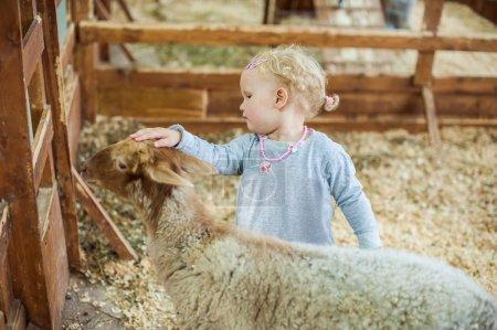Girl stroking a lamb