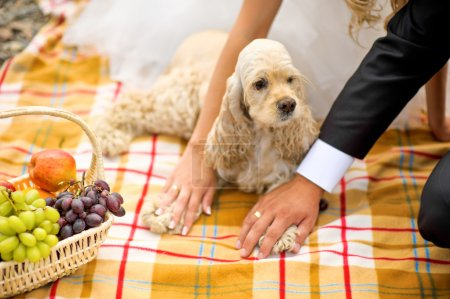 The groom, the bride and the dog Cocker Spaniel  a picnic basket
