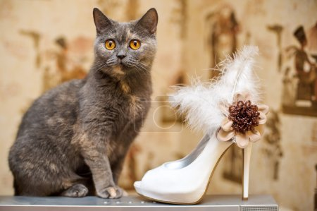 Cat and the bride shoes with feathers