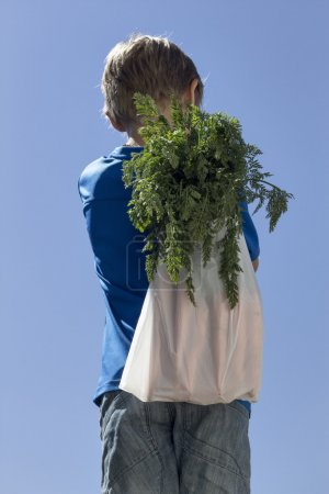 Little boy carries carrots. View from the back. Blue sky background. Healthy organic vegetables for kids concept