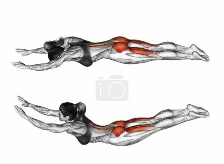 Photo pour Faites de l'exercice comme une mouche. Exercice de remise en forme. Les muscles cibles sont marqués en rouge. Étapes initiales et finales. Illustration 3D - image libre de droit